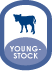 Youngstock